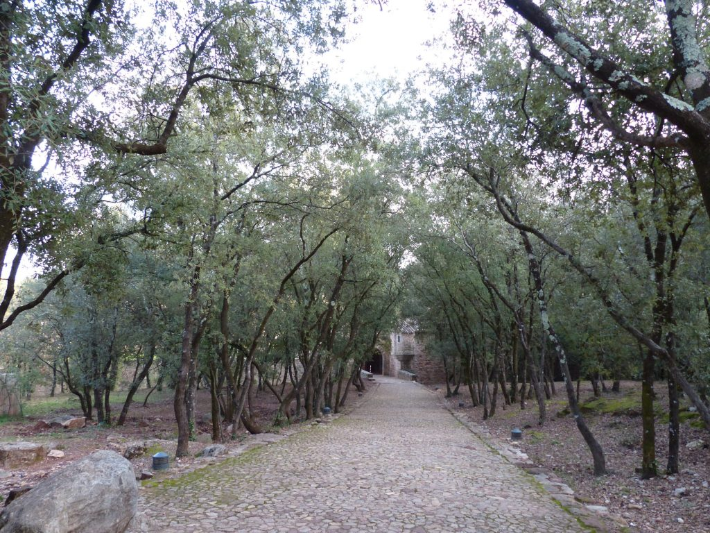 L'allée de chênes, façon Provence.